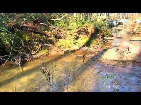 Viking Dash Trail Run