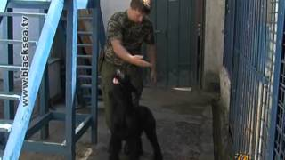 Опасная работа служебных собак