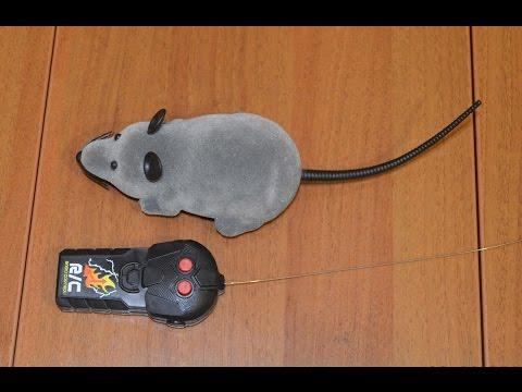 Вопрос: Заменяют ли коту игрушечные мыши настоящих?