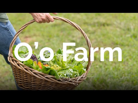 O'o Farm Tour - Unique things to do in Maui, Hawaii - Travel Video