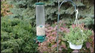 "Nuthatches And Chickadees, ""birds Instrumental"" - November 3, 2012"