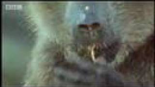 Monkeys eating shark eggs and other strange animal behavior - ocean animals - BBC wildlife