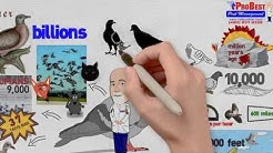 Pigeon Control - Pigeon Removal - Pigeon Exclusion Services Arizona