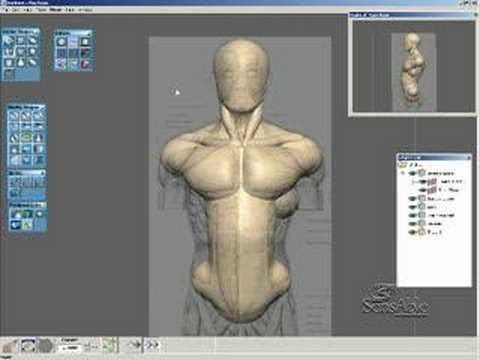 Anatomy Sculpting using FreeForm - YouTube