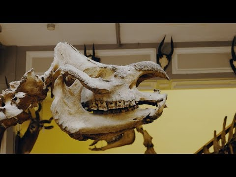 De-Extinction Week at Science Gallery Dublin