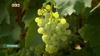 «KVINT»эссенция виноградной лозы