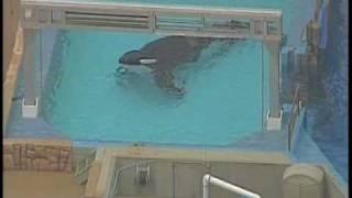 Killer Whale Kills SeaWorld Trainer