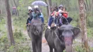 Download Video Elephant or hathi safari at chitwan national park, Nepal MP3 3GP MP4