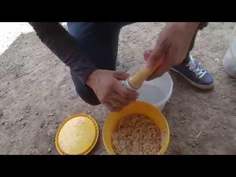 Umpan ikan Patin ( Kelapa Parut Peram ) Part 4 di Rozali Kolam Bukit Merah Perak