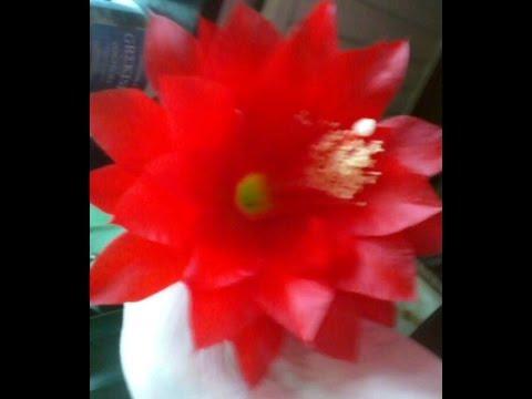 Комнатные цветы - названия и фото комнатных цветов
