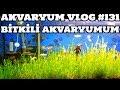 Akvaryum Vlog #131 (Bitkili Akvaryumum)