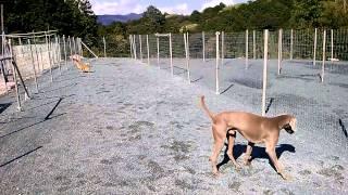 静岡県浜松市で犬のブリーダーをしているペットのブリーダーワンブーで...