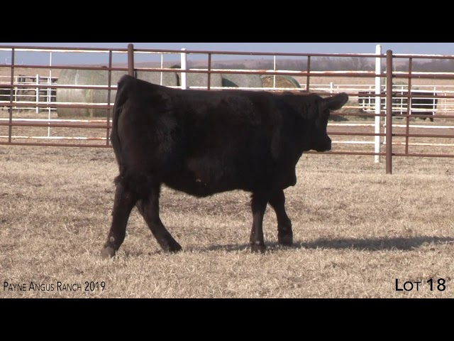 Payne Angus Ranch Lot 18