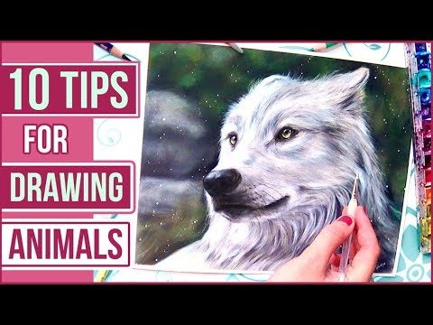 TOP 10 Tips for Drawing Animals