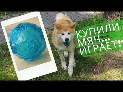Шопинг зоомагазин. Купили мяч...Сату играет!!!. Акита ину.