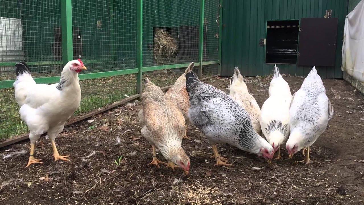 Инкубаторы для яиц, терморегуляторы, овоскопы, гигрометры на нашем сайте можно купить инкубатор для яиц с пересылкой по почте. Цены от.