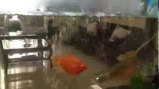 sandhu farm house,urban estate phase 2,patiala, India.Fish aquarium.