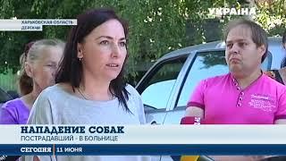 Два питбуля истерзали мужчину в Харьковской области