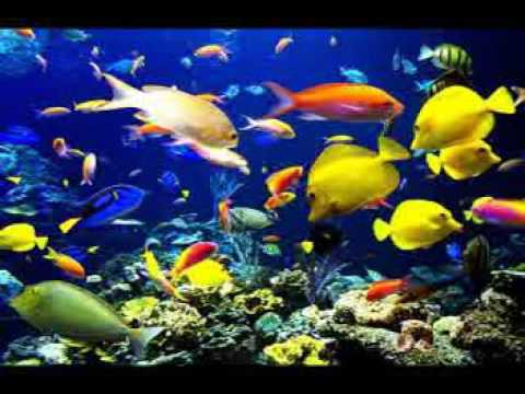 SaintSaëns : Carnival Of The Animals  The Aquarium