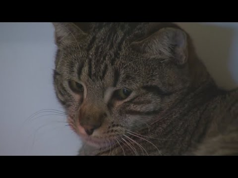Western New Yorkers weigh in on state law to ban declawing animals