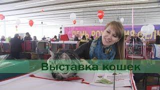 Выставка кошек. Фелита Апрелиссима. Минск