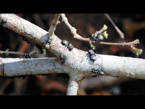 Stanford researcher uses ant network as basis for algorithm