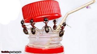 أذكى 10 حشرات على الأرض - ستنبهر من قدراتها !