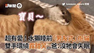 日本水獺睡前吸貓!環抱橘貓露甜笑 像極了愛情|寵物