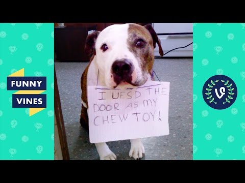 Best GUILTY Pets & Animals Compilation | Funny Vines