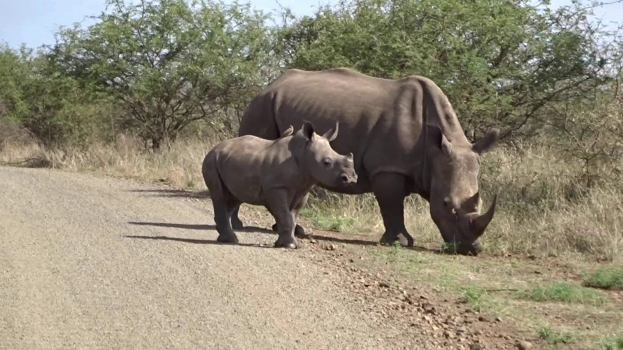 Animal Sightings from Crocodile Bridge to Skukuza - Kruger National Park