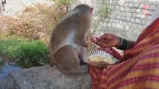 Poor women adopt monkey that lost both hands in accident