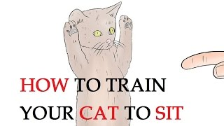 How to Train Your Cat to Sit