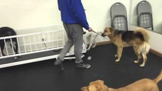 Nyc Dog Training Class Transformation - Dctk9