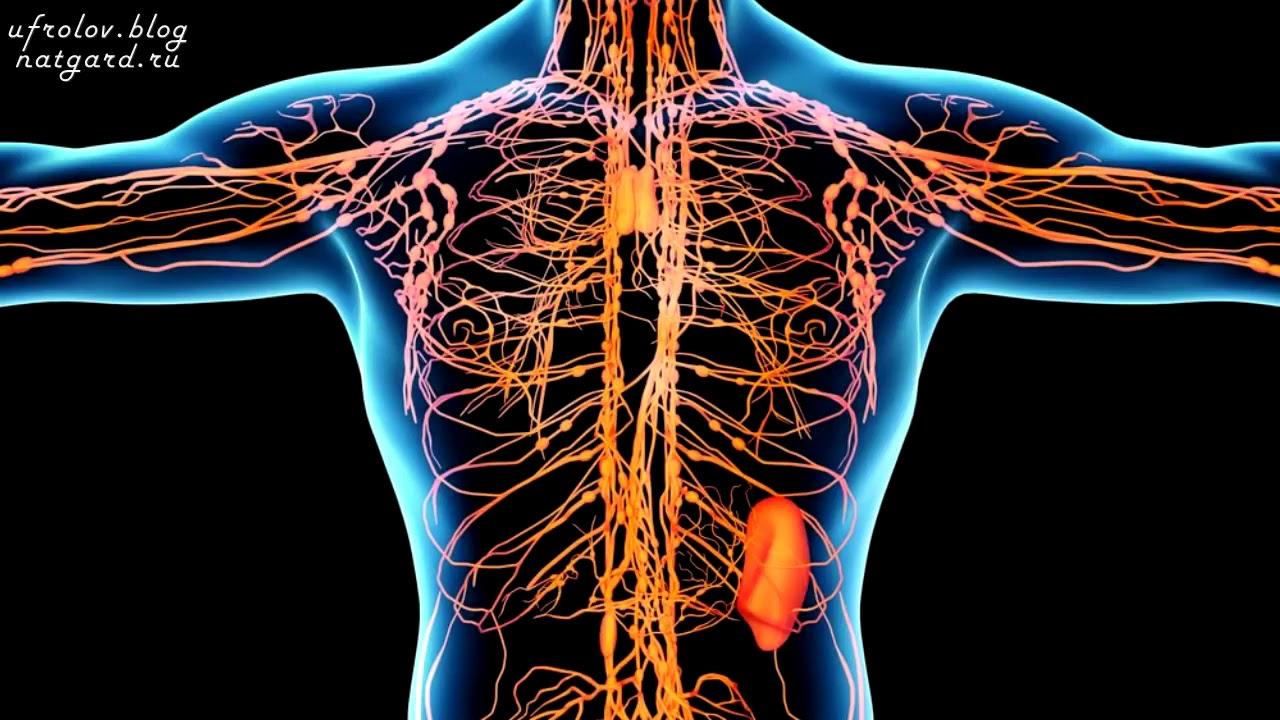 Очищение лимфатической системы путь к здоровью estet-portal.