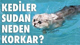 Kediler Sudan Korkar Mı?