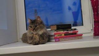 Кошку забрали из приюта домой \\День 1