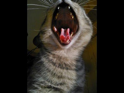 Возраст кошки - кошачий век.По каким меркам возраст кошек, соизмерим с  возрастом  человека?
