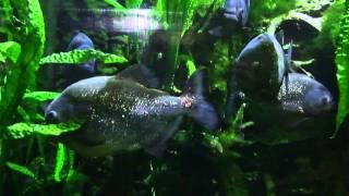 видео Морской аквариум-музей