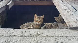 Kedilerimiz Maşaallah