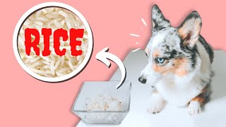Why You Shouldn't Feed Your Dog Rice (Feed This Instead!)