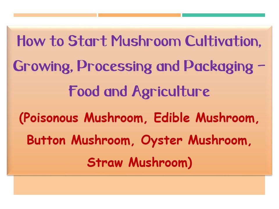 How to Start Mushroom Cultivation, Growing, Processing and Packaging - Food  and Agriculture