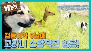 검둥이와 6남매 '고라니 소탕작전' 大 성공★ I TV동물농장 (Animal Farm)   SBS Story