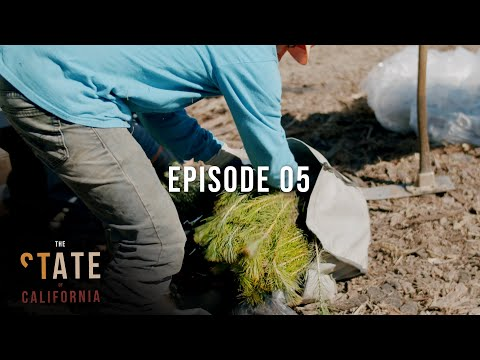 California Tree Planting | The State of California | One Tree Planted