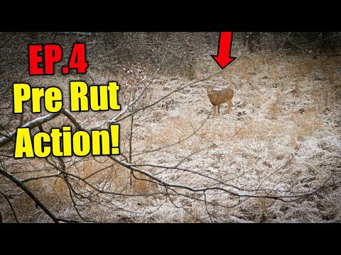 Wisconsin Public Land Bow Hunt!! ( Pre-Rut Action!!) 2020