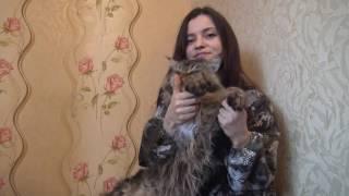 Тродовыебудни шикарного кота или как мы снимали приветствие для