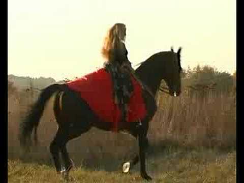 клип девушка и лошадь