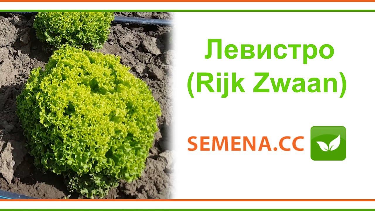 Покупайте семена салата в профессиональной и мелкой упаковке с доставкой почтой в украине. Выгодная цена при оплате наложенным платежом.