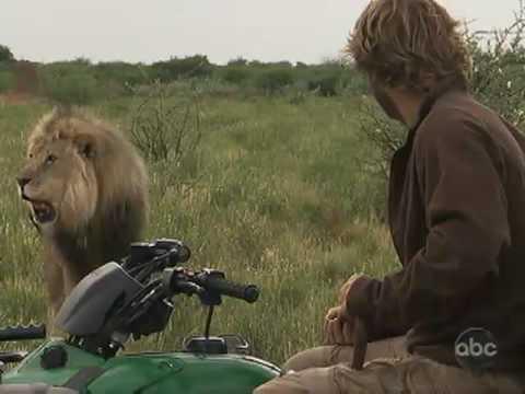 Big Cat Trainer Rehabs Wild Lion Pride