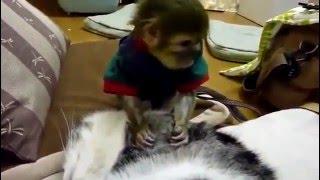 Обезьяна и кошка!Лучшие друзья!Видео приколы с кошками!
