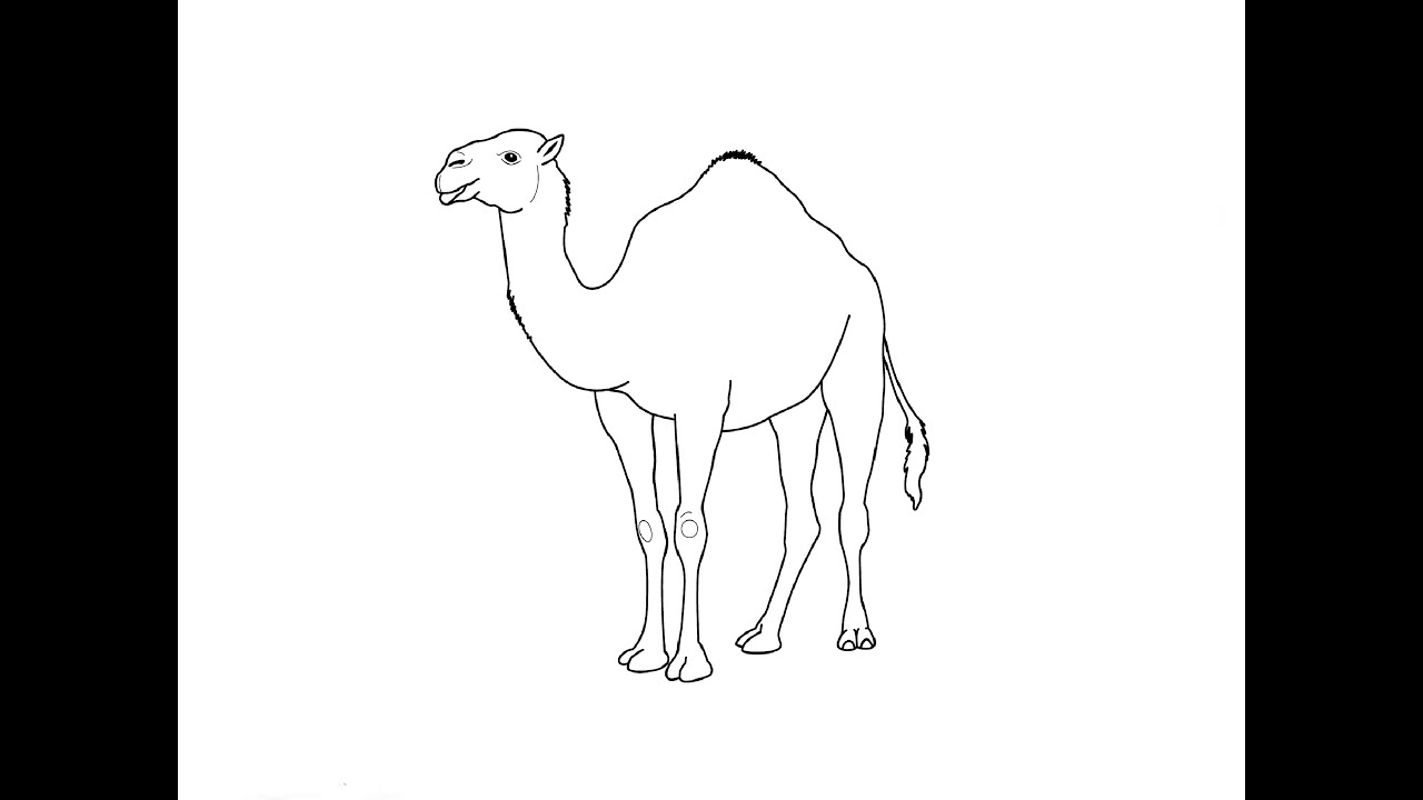 It's just an image of Adorable Simple Camel Drawing